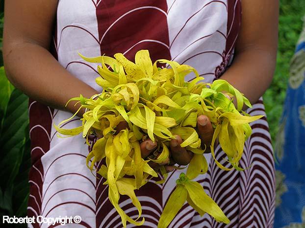Ylang Ylang Bouquet