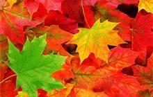 Leafy Pyrazine at 0.1% in DPG