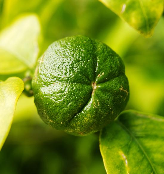 mandarin green essential oil organic