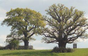 English Oakwood CO2 (SELECT)