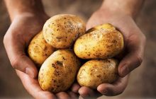 Potato Pyrazine at 0.1% in IPM