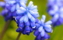 Florhydral (Floral Butanal)