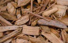 Sandalwood-spicata-essential-oil