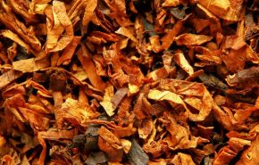 Virginian Tobacco Absolute