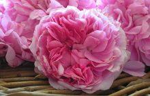 rose-damascena-extrait