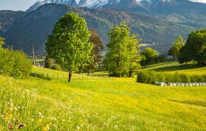 Austrian Hay Essential Oil