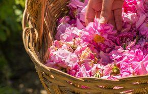 Rose Petals Persian Otto