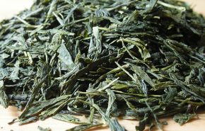 Green Tea Sencha Shokai 25% Tincture